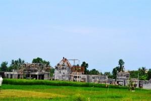 Jual Tanah di Canggu Bali 46,3 are Pinggir jalan view sawah – TJCG037J