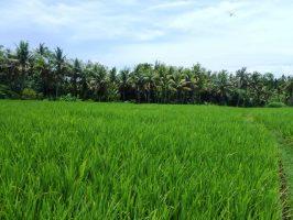 Jual tanah di Bali 20 Are di Canggu