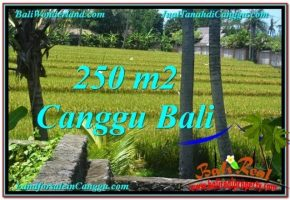 JUAL MURAH TANAH di CANGGU 250 m2  View sawah lingkungan villa