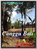 JUAL TANAH MURAH di CANGGU BALI 11.25 Are di Canggu Pererenan