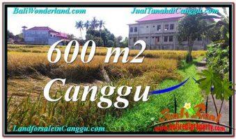 JUAL TANAH MURAH di CANGGU 600 m2  View sawah lingkungan villa