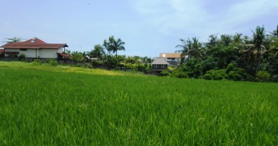Tanah di Canggu Bali