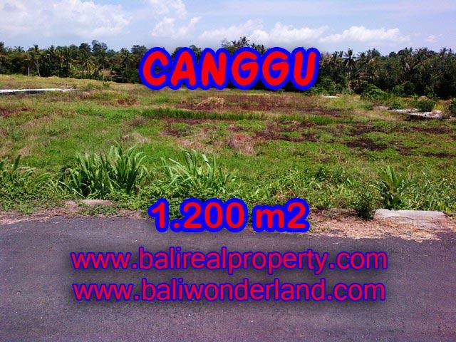 Tanah dijual di Canggu 12 Are View sawah di Tumbak Bayuh Bali