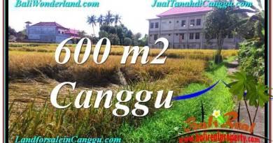 TANAH MURAH di CANGGU JUAL 6 Are View sawah lingkungan villa