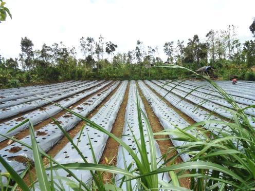 Tanah dijual di Tabanan