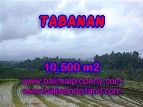 TANAH DI TABANAN BALI DIJUAL CUMA RP 320.000 / M2