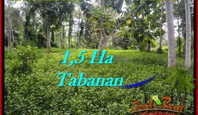 JUAL TANAH MURAH di TABANAN 15,550 m2 View kebun dan sungai