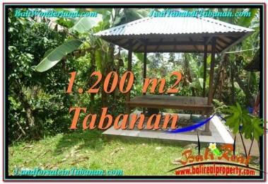 TANAH MURAH JUAL di TABANAN BALI 12 Are View kebun dan sungai
