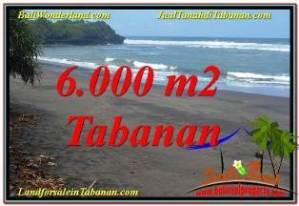 DIJUAL TANAH MURAH di TABANAN BALI 60 Are di Tabanan Selemadeg