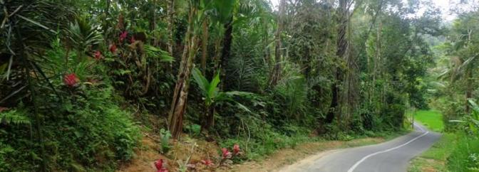 TJUB110 tanah dijual di Ubud