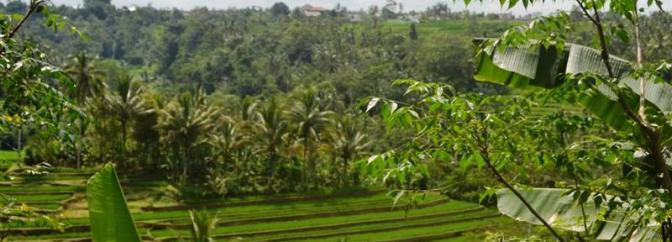 Jual tanah murah di Tabanan Bali