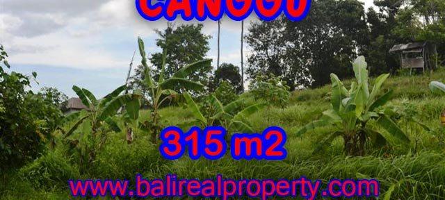 Tanah dijual di Bali 315 m2 view sawah,sungai di canggu brawa