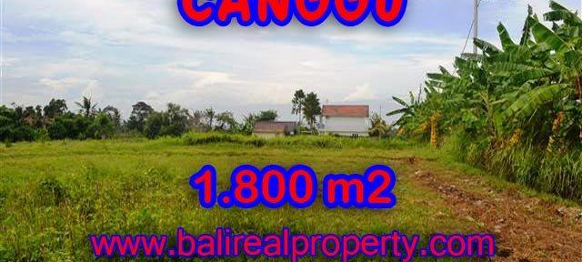 INVESTASI PROPERTI DI BALI - TANAH DI CANGGU BALI DIJUAL CUMA RP 4.750.000 / M2