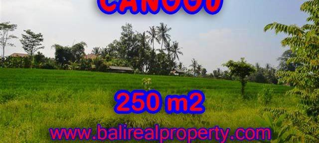 INVESTASI PROPERTI DI BALI - DIJUAL TANAH DI CANGGU BALI CUMA RP 2.750.000 / M2
