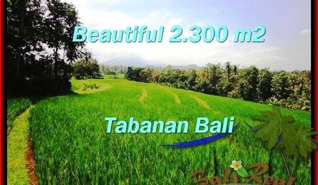 TANAH di TABANAN BALI DIJUAL MURAH Untuk INVESTASI TJTB209
