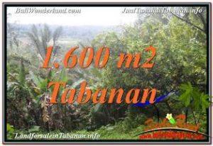 TANAH di TABANAN DIJUAL MURAH 1,600 m2 di Tabanan Selemadeg