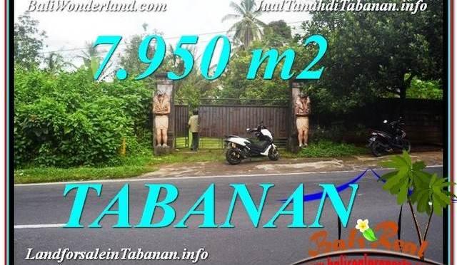 TANAH MURAH DIJUAL di TABANAN 79.5 Are di Tabanan Bedugul