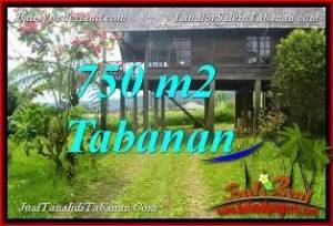 DIJUAL TANAH MURAH di TABANAN BALI 7.5 Are di Tabanan Bedugul