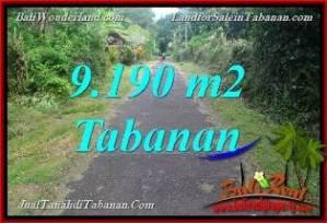 TANAH MURAH DIJUAL di TABANAN BALI 91.9 Are di Tabanan Selemadeg Timur