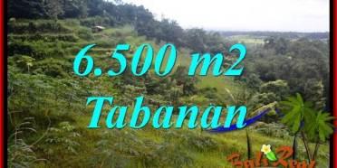 JUAL Murah Tanah di Tabanan 6,500 m2 View Gunung dan Sawah