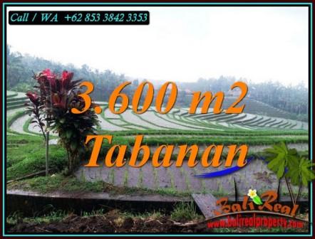 TANAH DIJUAL MURAH di TABANAN 3,600 m2 di SELEMADEG TABANAN