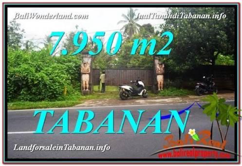 TANAH MURAH DIJUAL di TABANAN BALI 7,950 m2 di Tabanan Bedugul