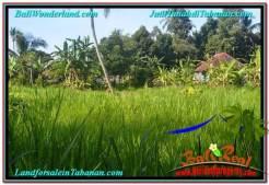 JUAL MURAH TANAH di TABANAN BALI 81 Are di Tabanan Marga