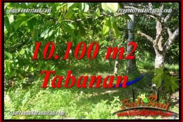 JUAL TANAH MURAH di TABANAN BALI 10,100 m2 View kebun
