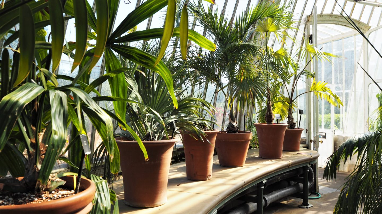 Giant plant pots, giant plants, kew gardens, palm house
