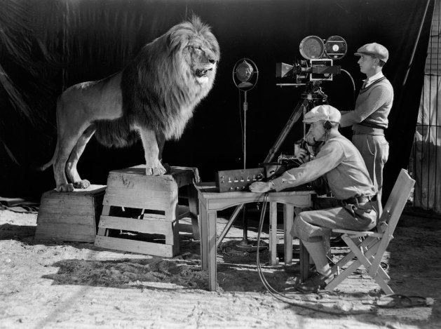 El león de la Metro antes de interpretar uno de sus temas principales.