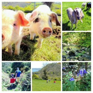 Pigs and goats, oh my! Join us for a day at the farm.
