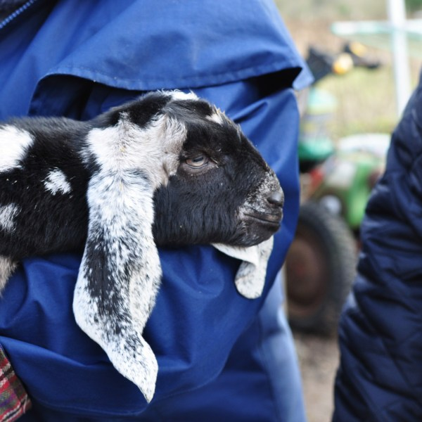 Our community includes baby goats sometimes who can be used to teach and learn a wide variety of subjects.