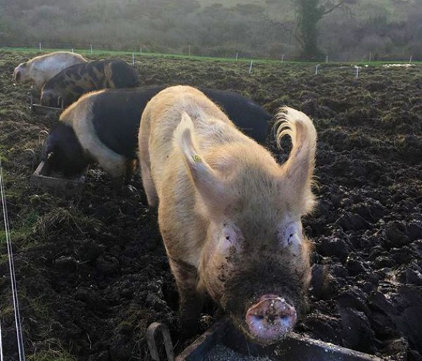 Jubilee Farm's view and a couple of our amazing pigs.