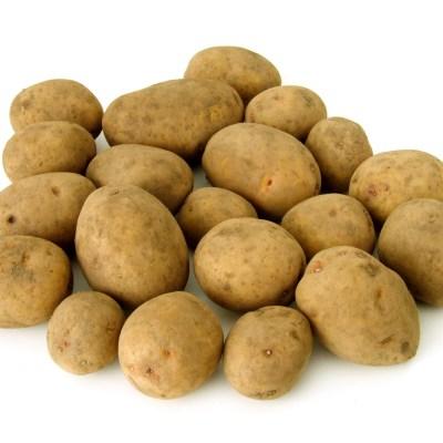 kartoffeln-Kopie