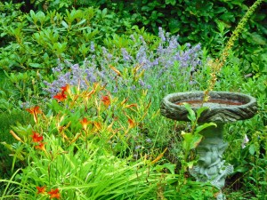 DAYLILLIES AND LAVENDER