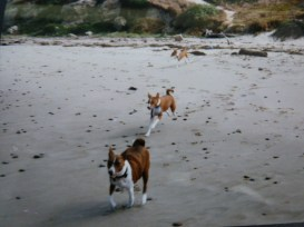 Willie, Rocky, Bella on beach