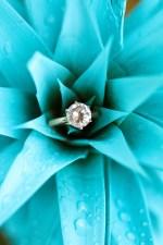 ring in blue flower