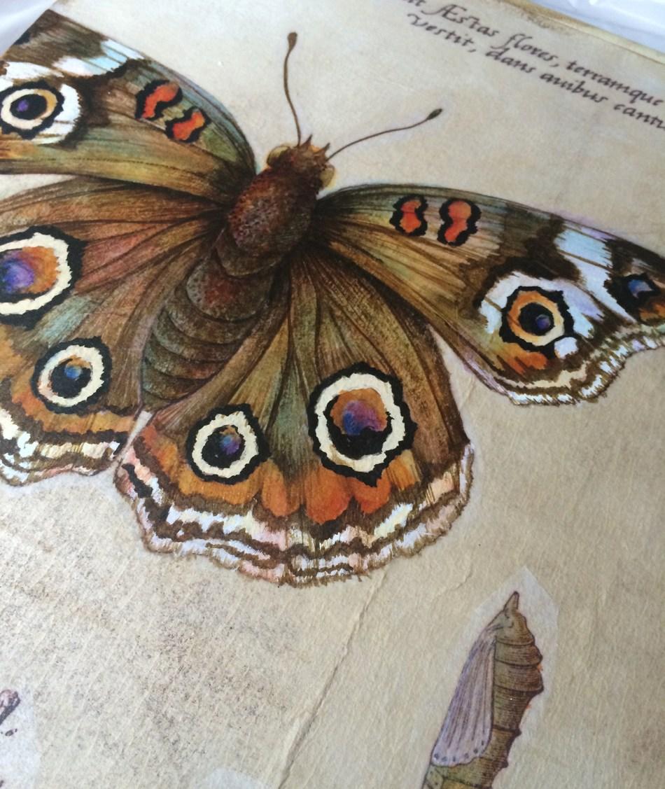 moth detail
