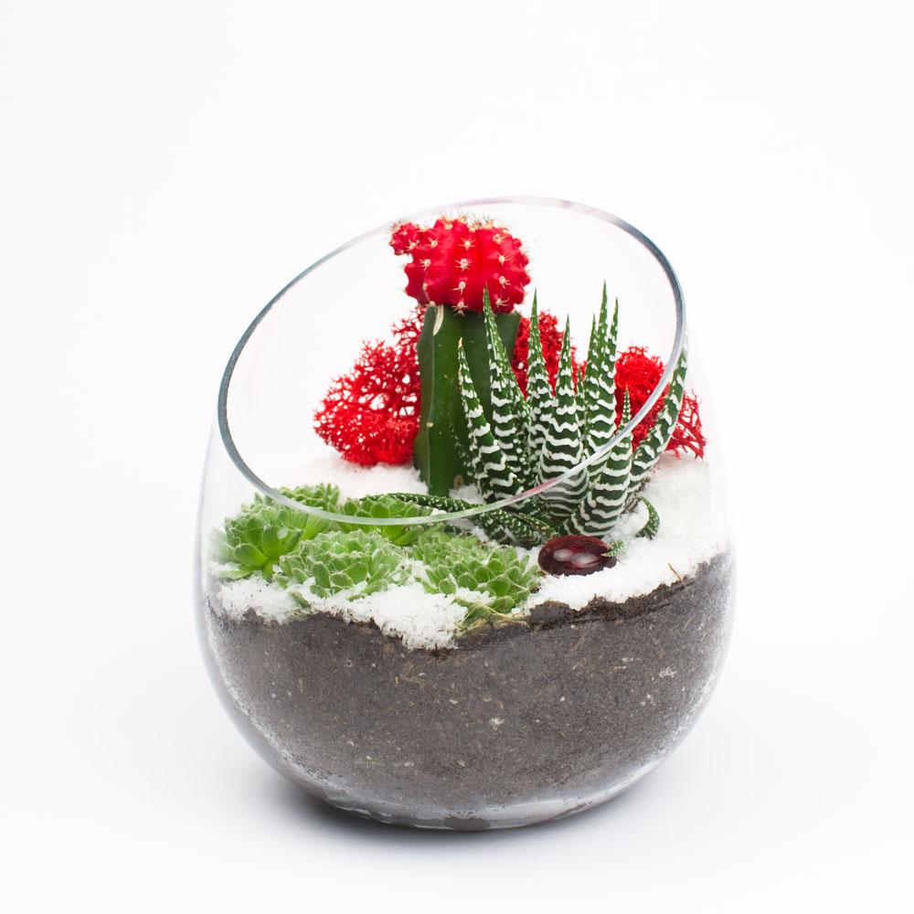 Winter edition gift succulent terrarium kit juicykits the winter edition solutioingenieria Image collections