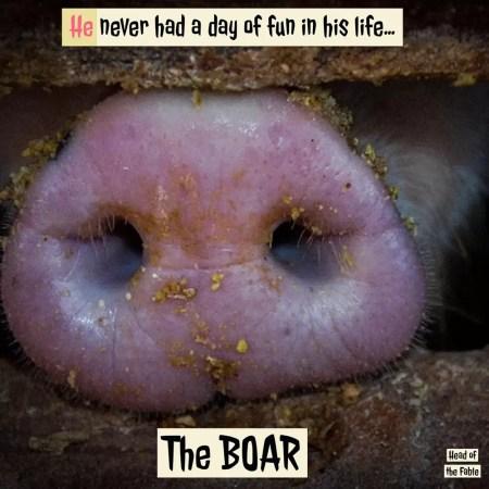Pigs nose quote