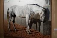 Andrés Castellanos - Cavallo blanc
