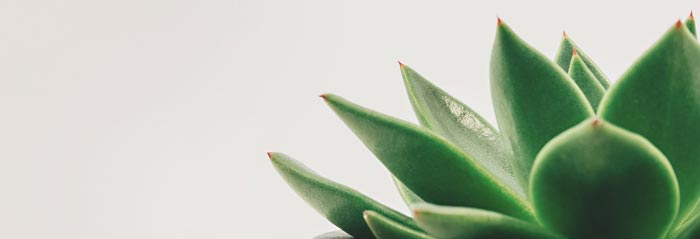 Close-up of succulent on neutral background