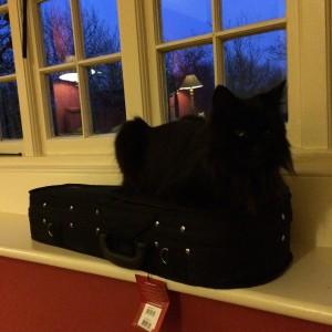 The wisteria-climbing cat (on my uke!)