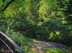 Central Park UWS Manhattan