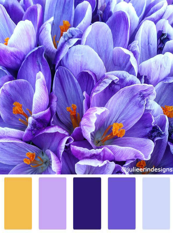Crocus flower bright purple colour palettes
