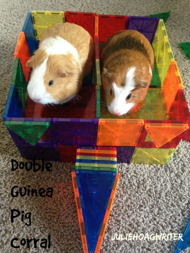 Double corral for guinea pigs