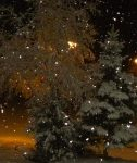 Winter Scene of trees with snow falling