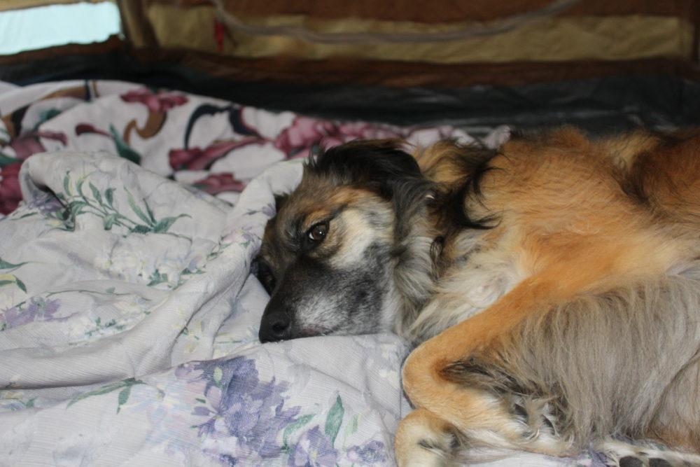 Frida snuggling in blanket in the tent