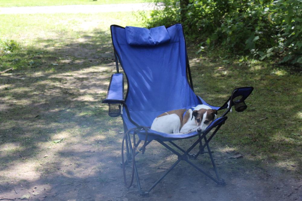 Kipper lounging in lawn chair
