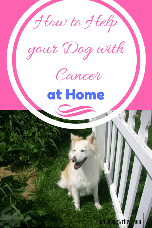 How to Help your Dog with Cancer at Home | dogs | sick dogs | dogs with cancer | dogs with cancer diet | dogs with cancer story | dogs cancer | dogs cancer warning signs | dogs cancer treatment | cancer in dogs signs of | pet care dogs | care for dogs | care for a sick dog | rescue dogs | memory books @juliehoagwriter.com affiliate links